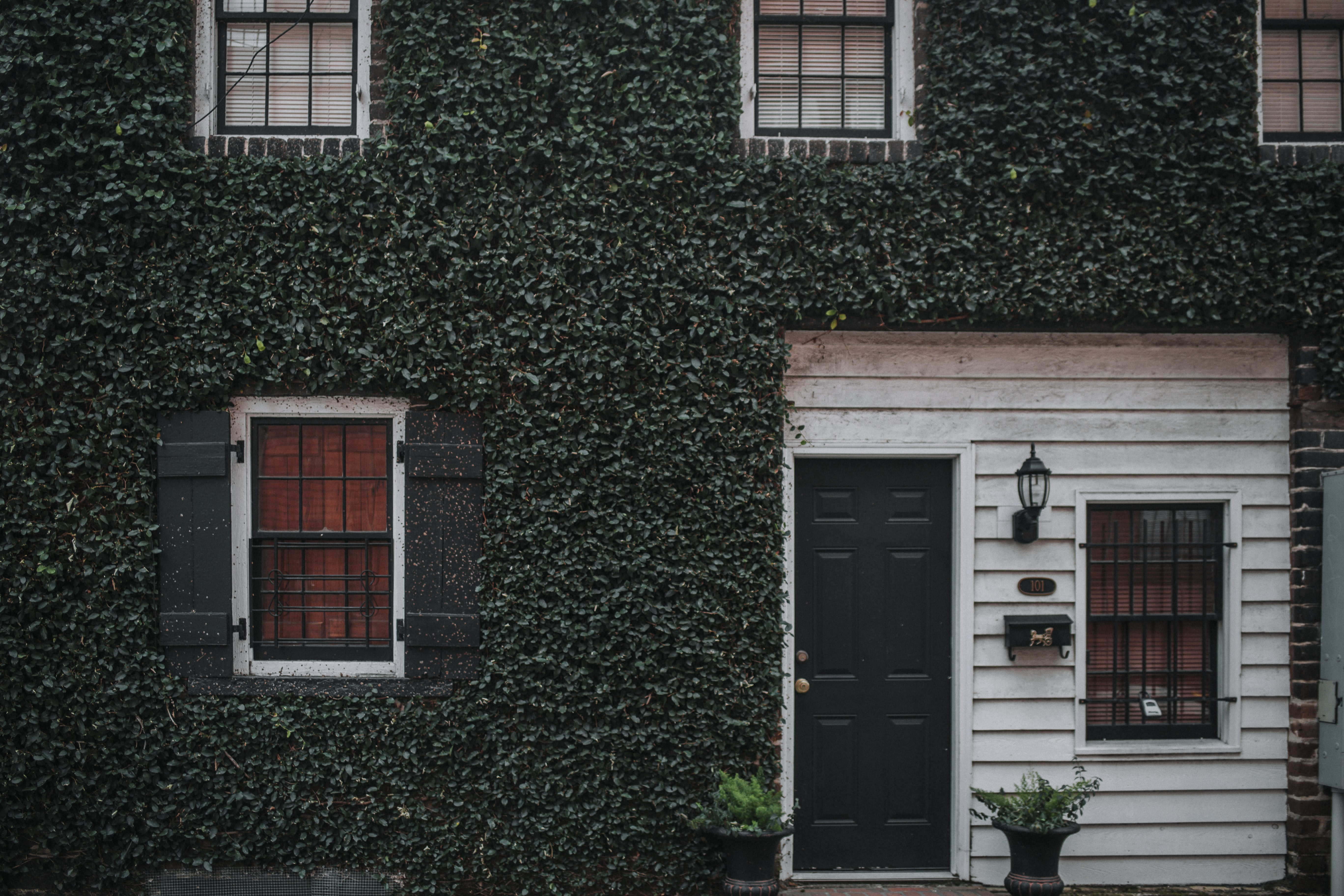 The front wall of an elegant house covered with a rich growth of ivy