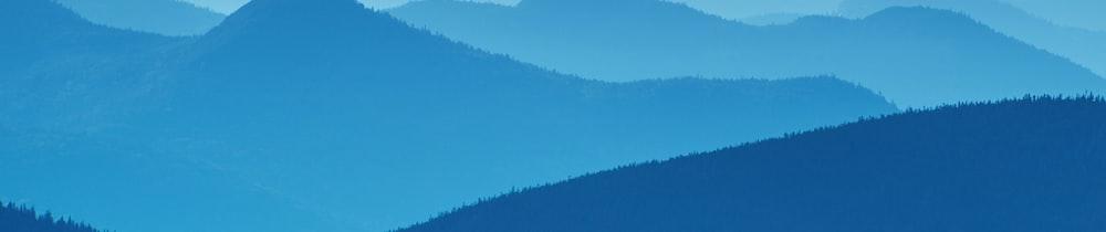 American Shiba header image