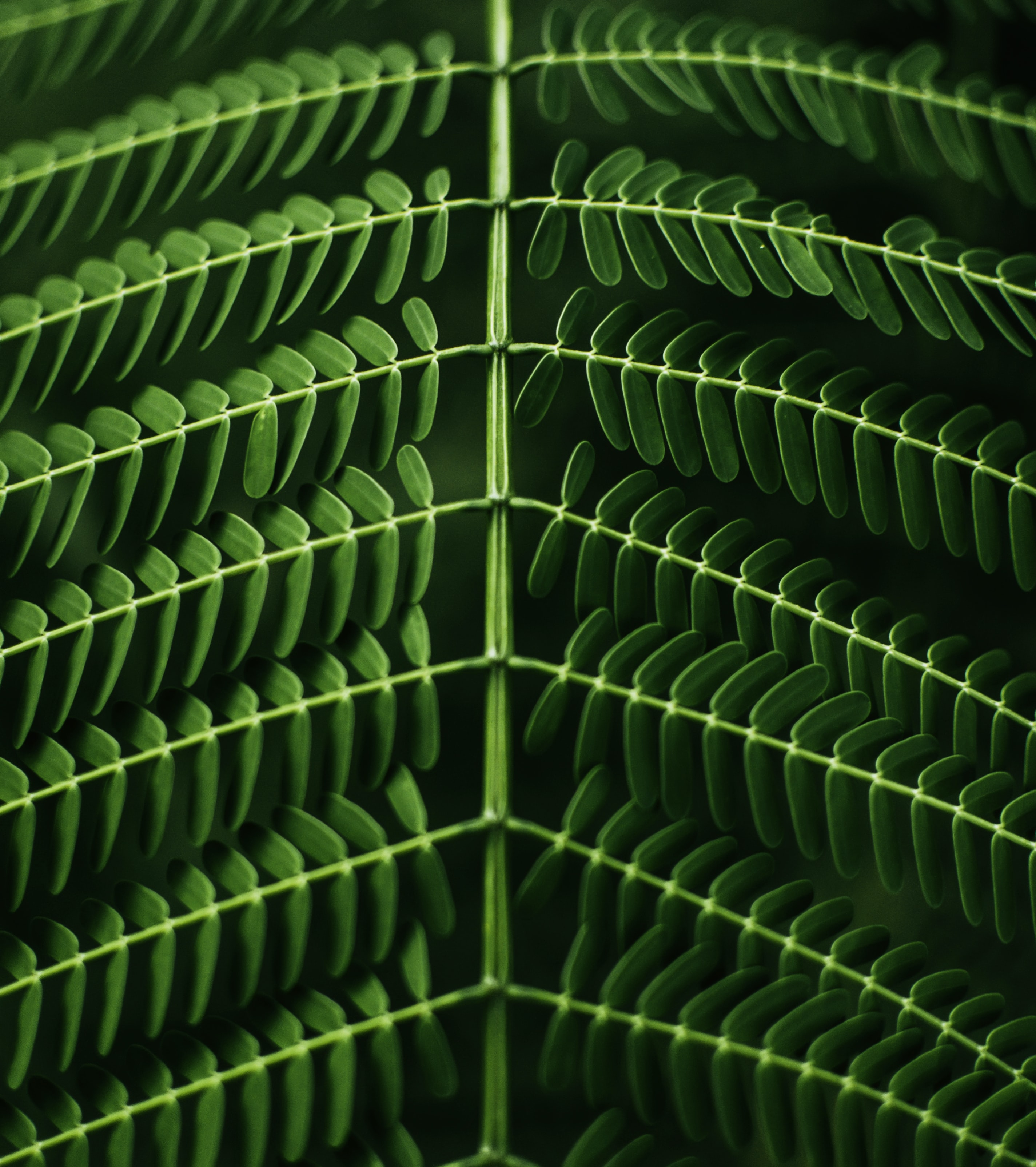macro photography of green leafed plant