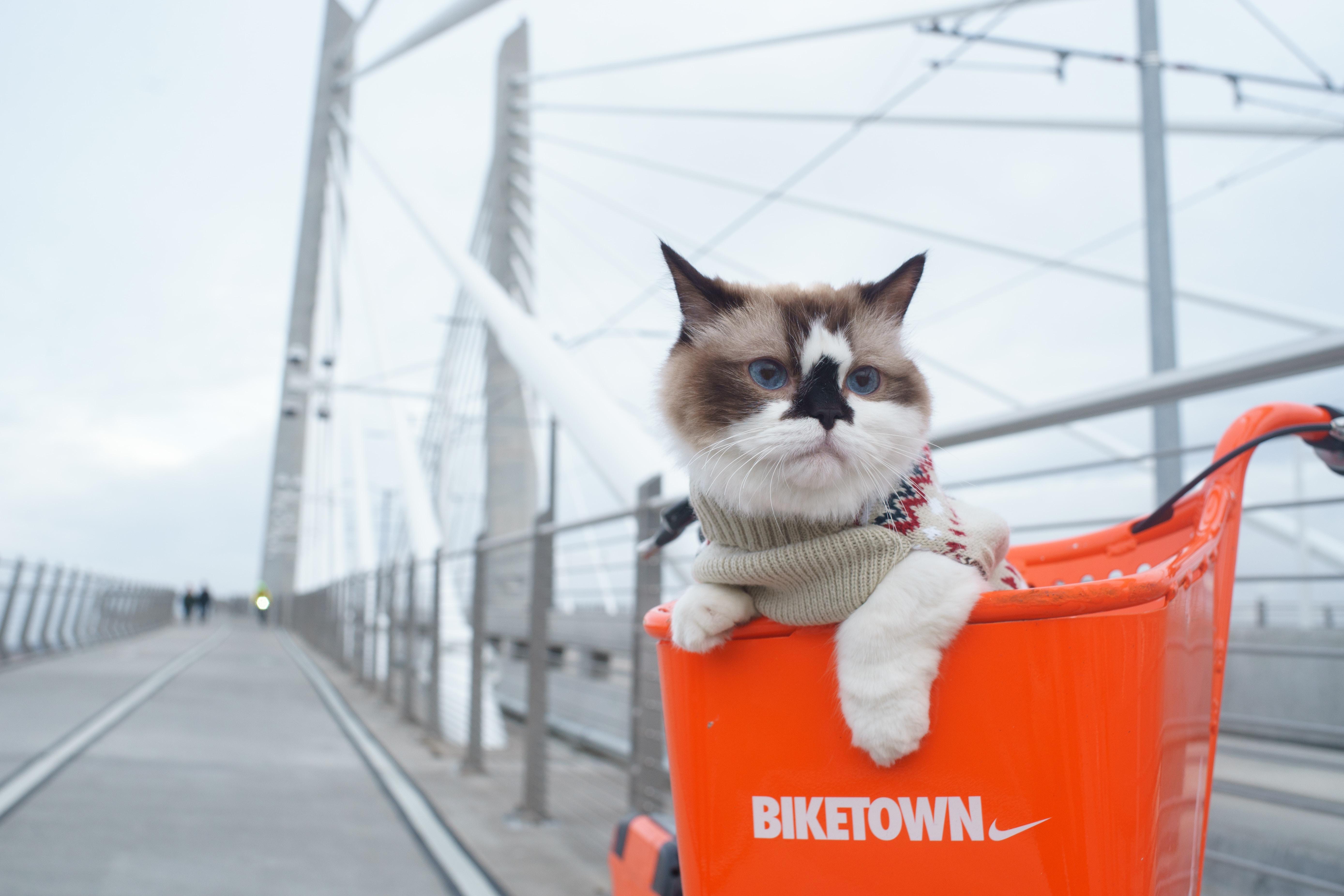 A cat in a Biketown bike basket while crossing a Portland bridge