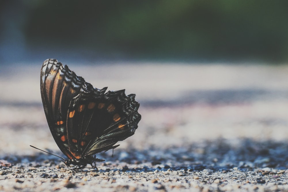 brown moth on gray soil