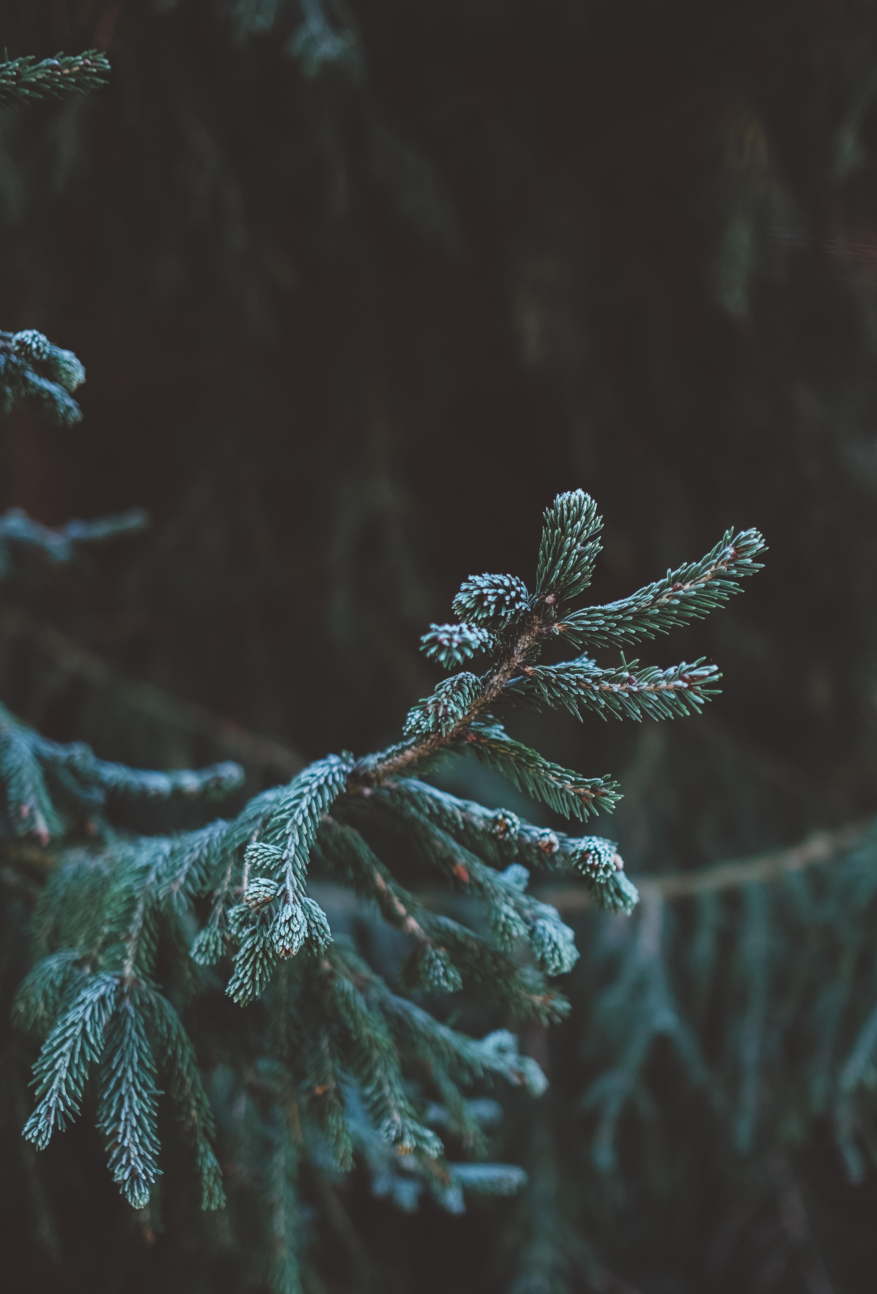 green fir tree in tilt shift lens photography