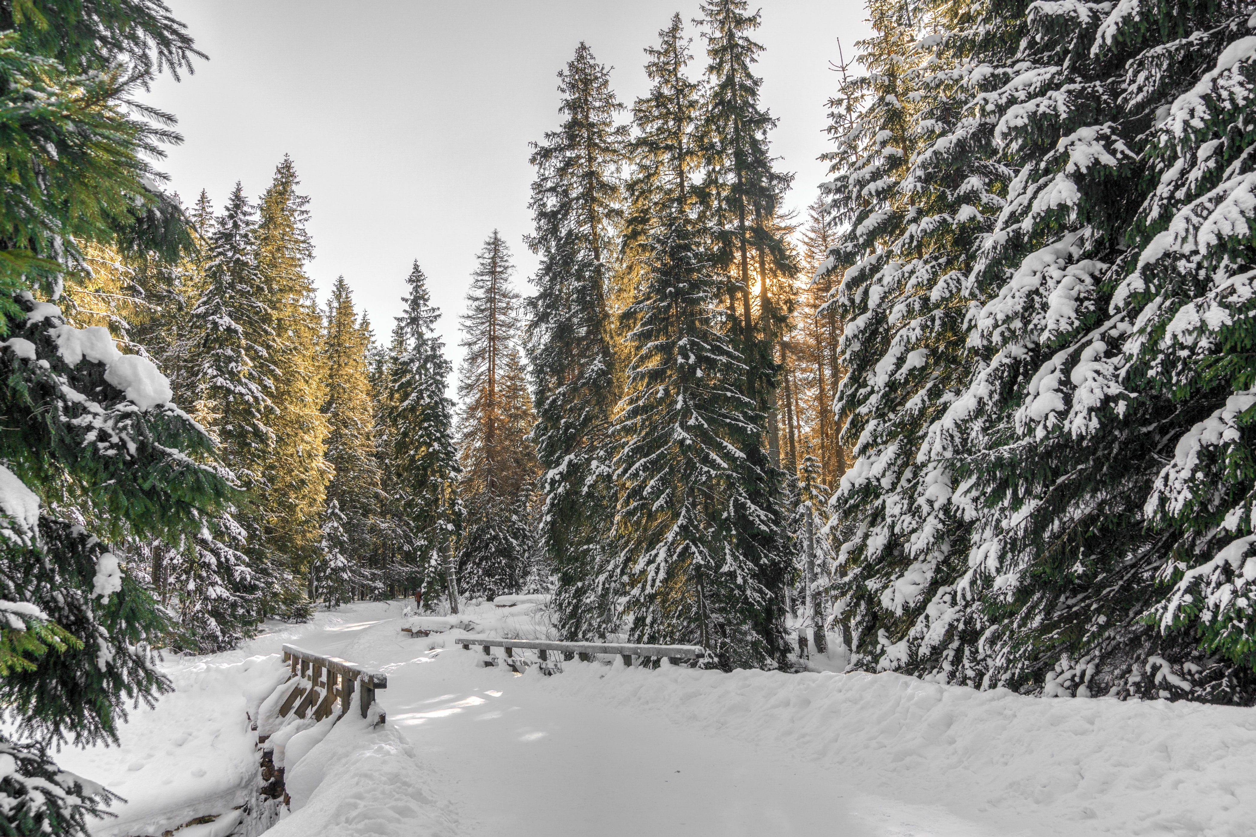 A view of a snow covered bridge on a road in the middle of the forest