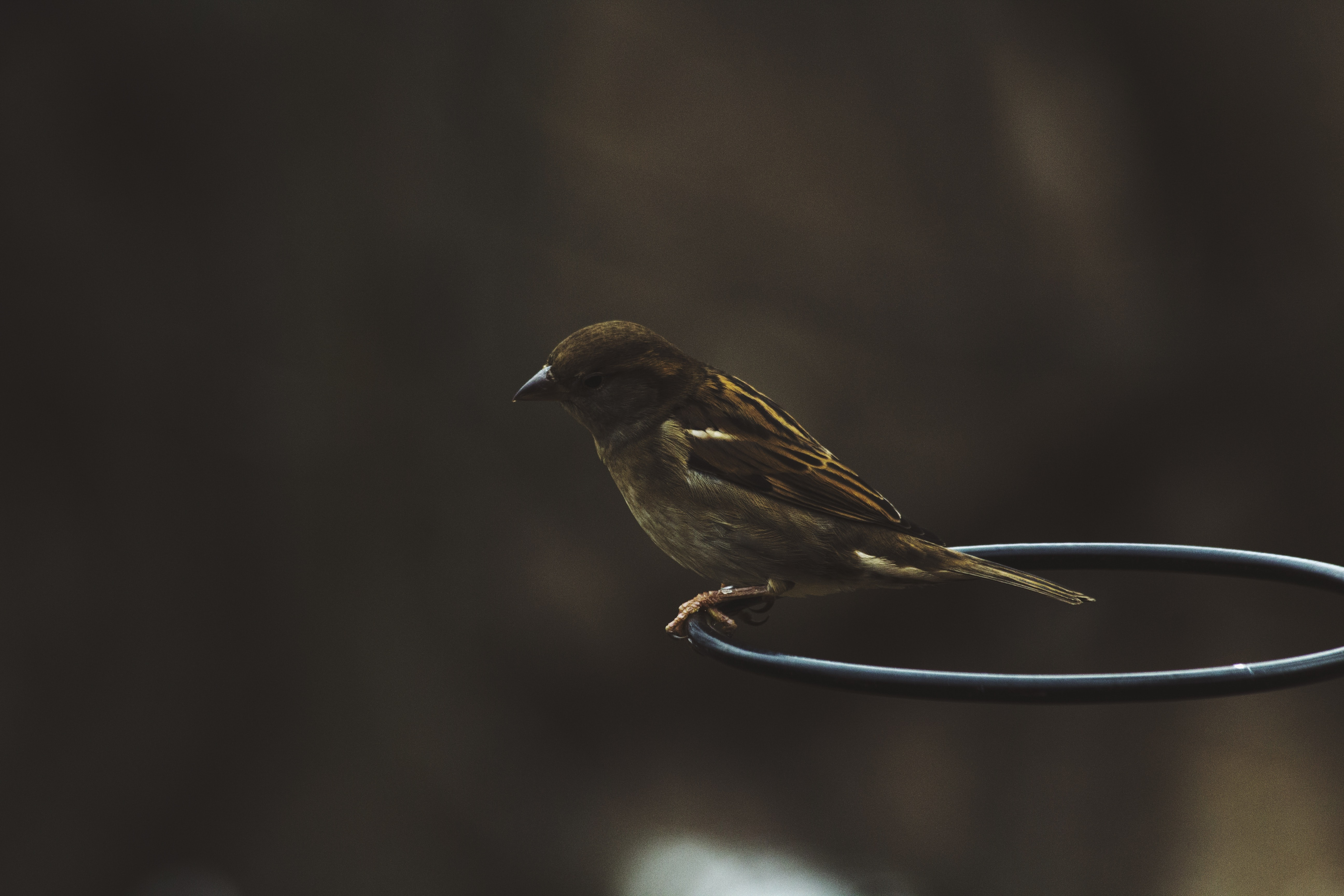 Bird perched on the edge of a hoop