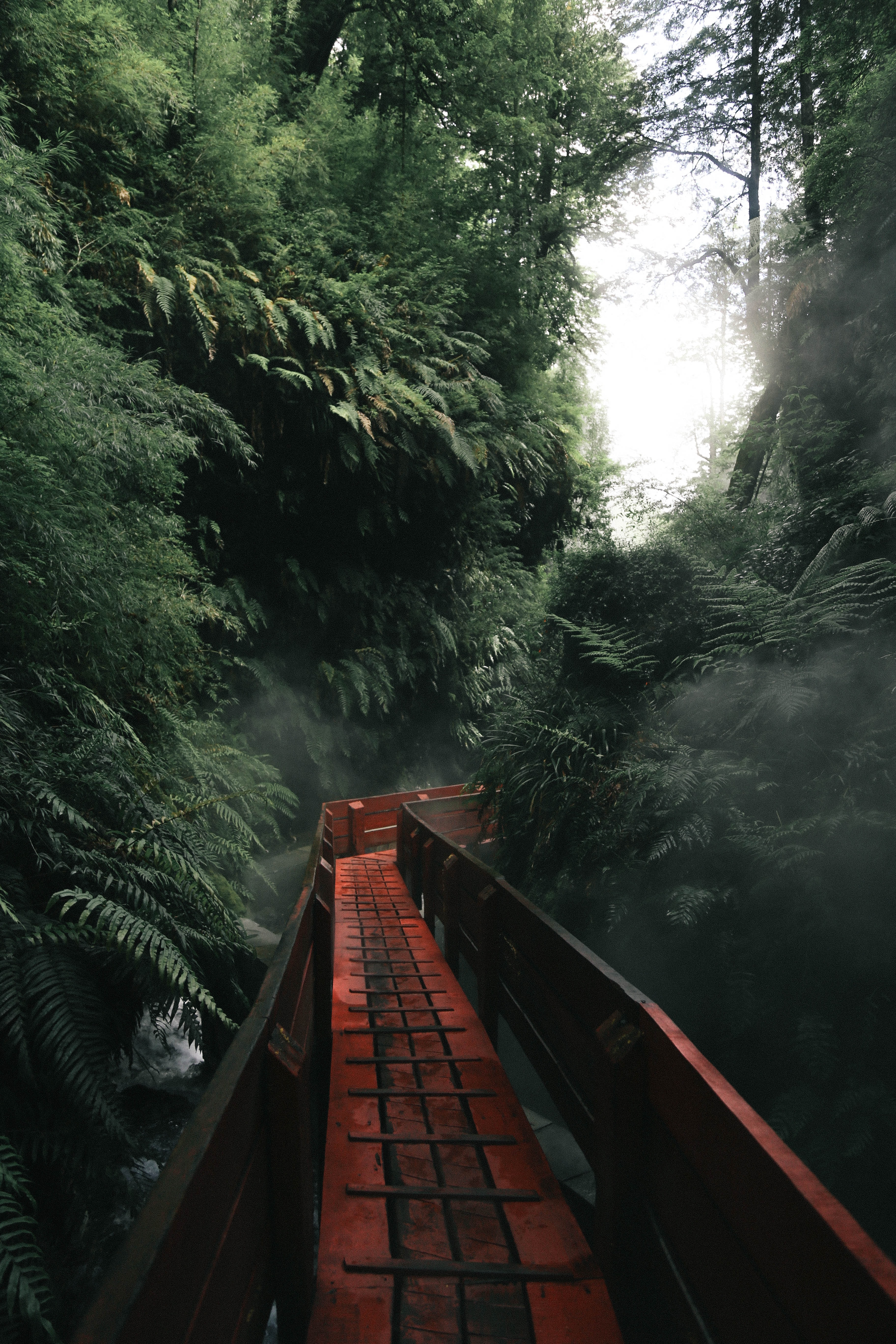 A red walking pathway that travels through a heavily treed forest.