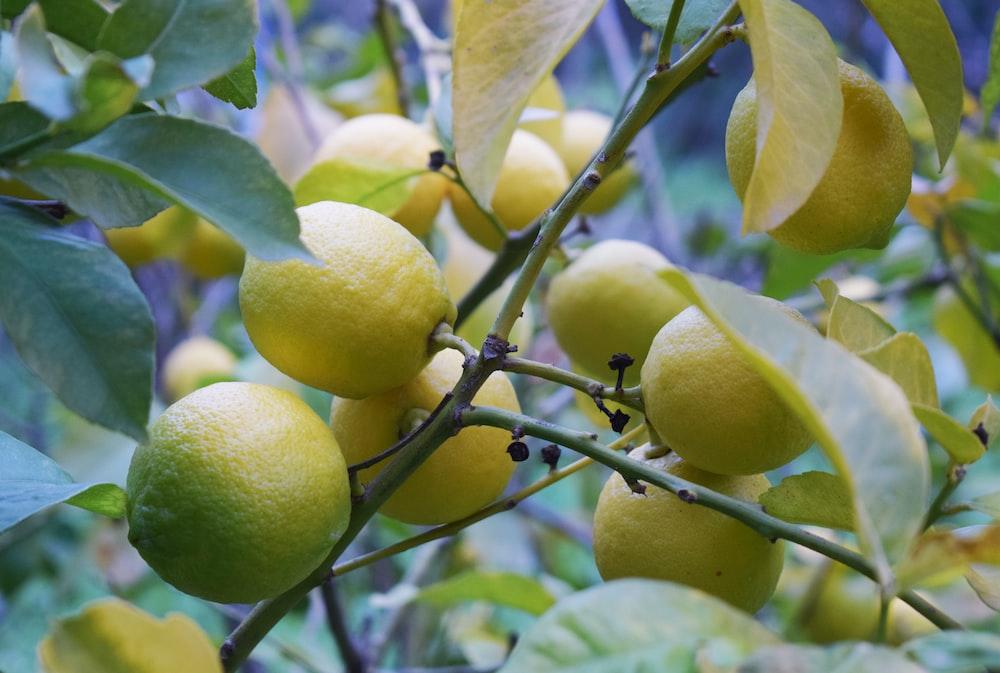 round beige fruit