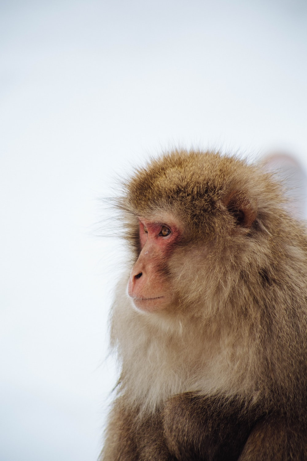brown monkey on closeup photography