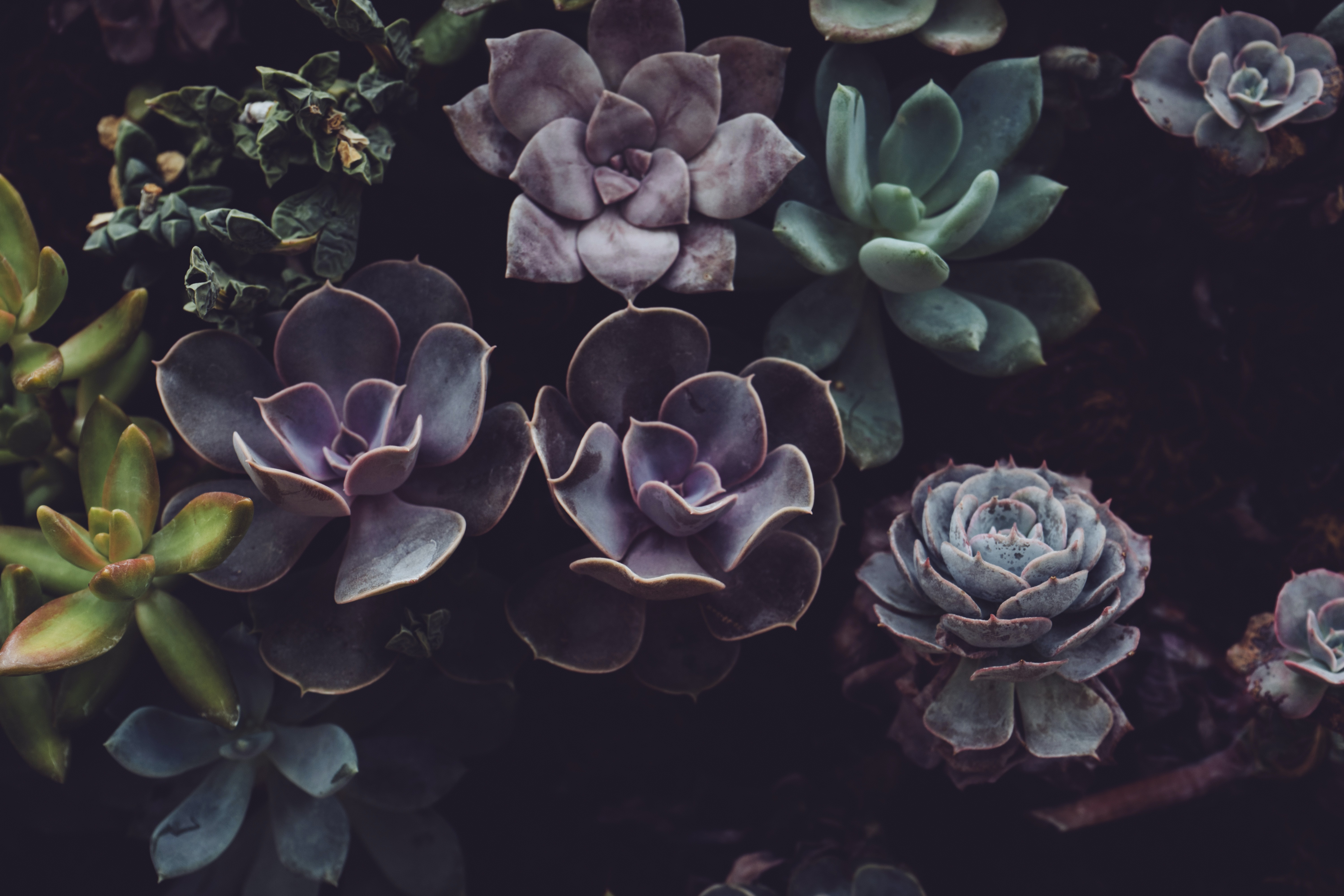 close photo of succulent plants