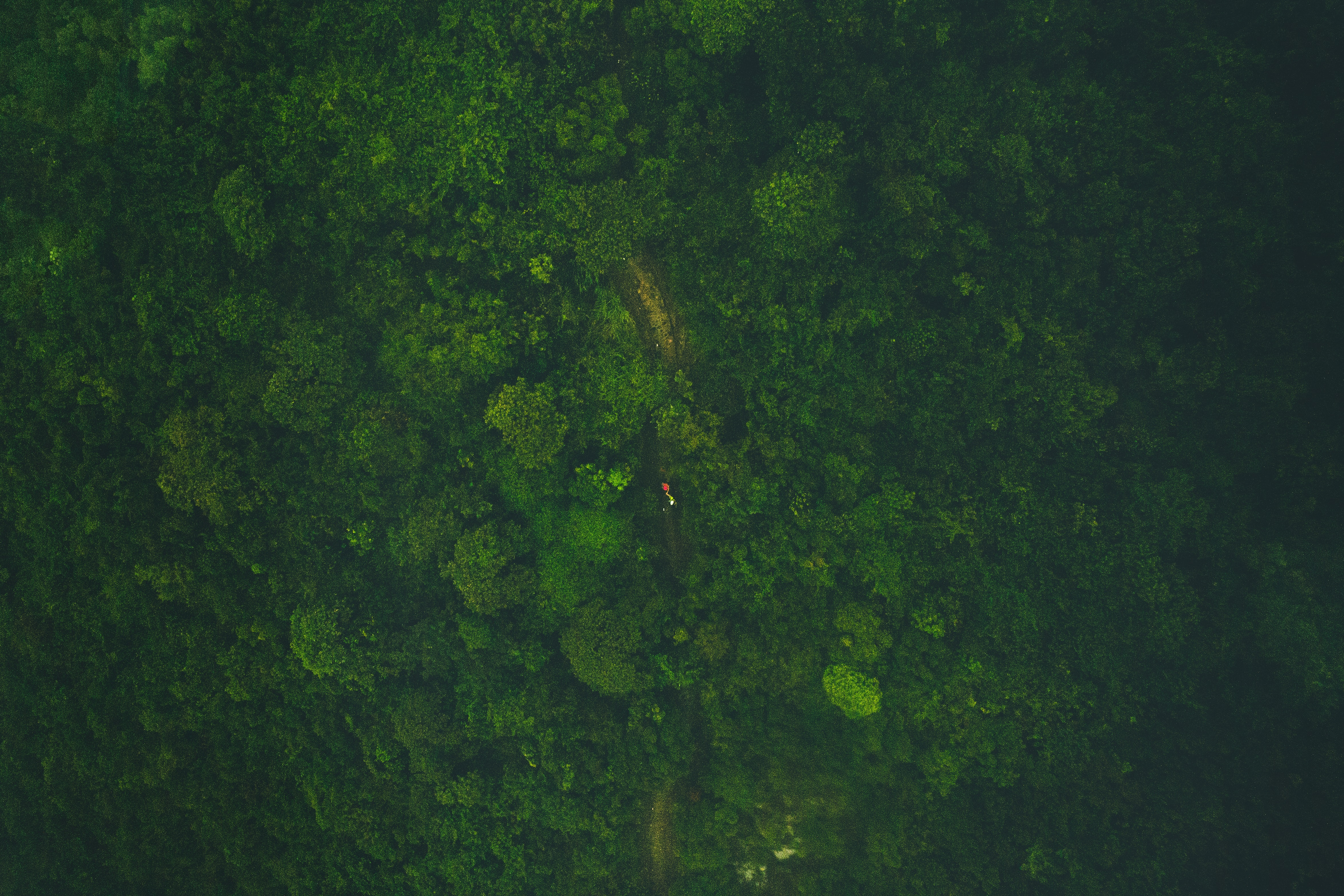 A drone shot of a hiker on an overgrown footpath in a green forest on Lantau Island