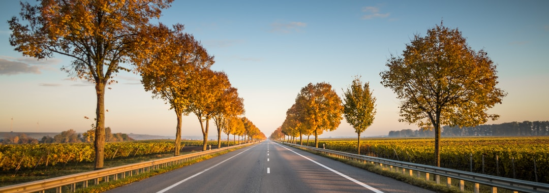 long straight road with trees on the side