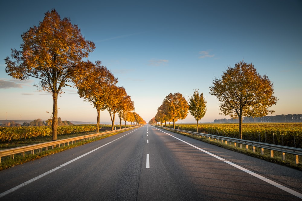 Image result for highway horizon fall trees