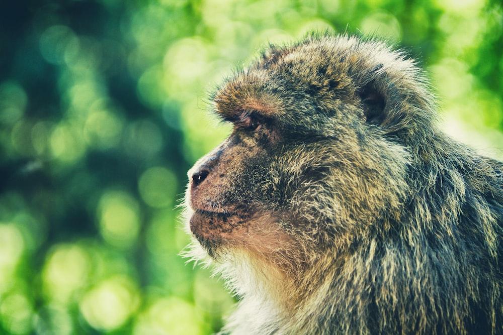 macro photography of monkey