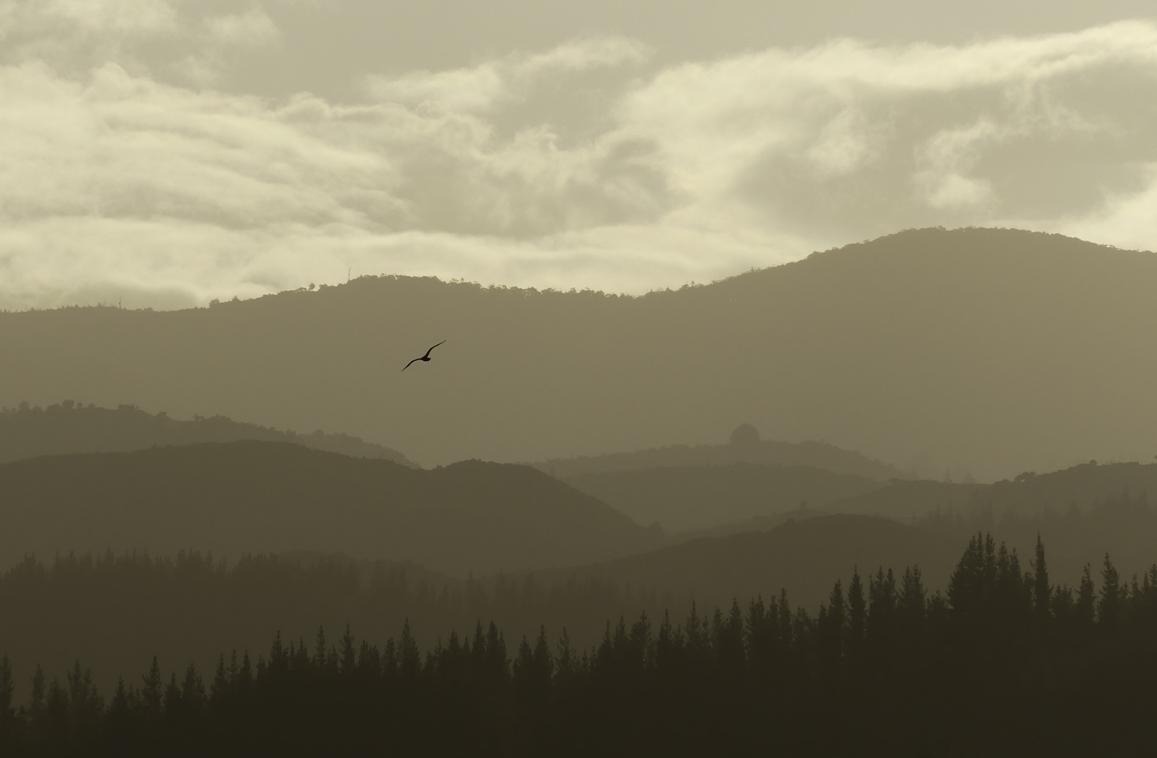 A hazy shot of a silhouette of a bird above wooded hills