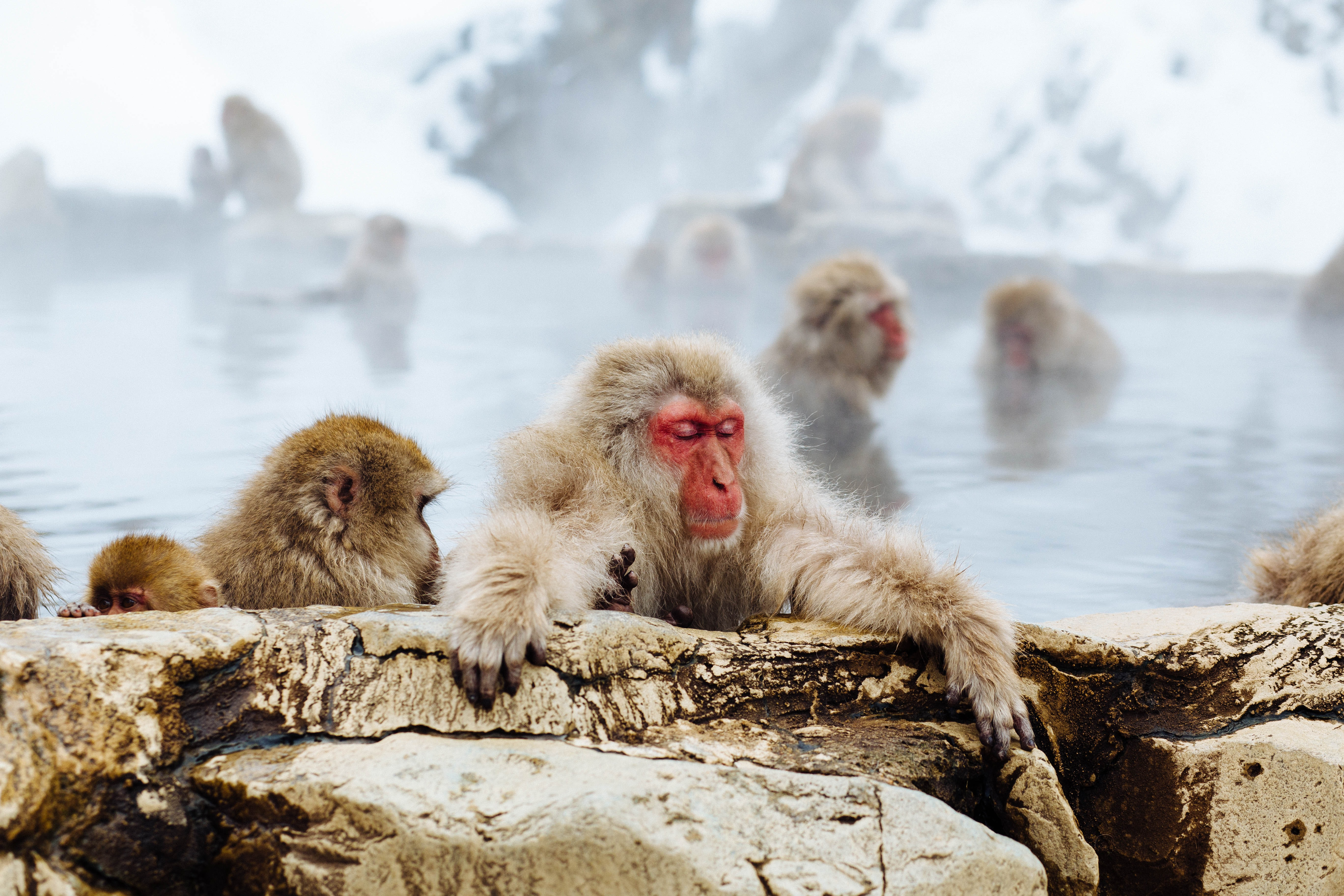 primates soaking in hot spring