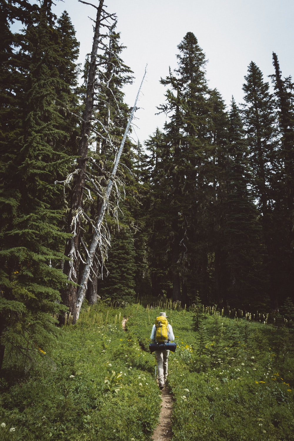 person with yellow hiking backpack walking in between grass with pine trees ahead during daytime
