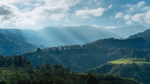 コロンビア ラ・エスペランサ農園