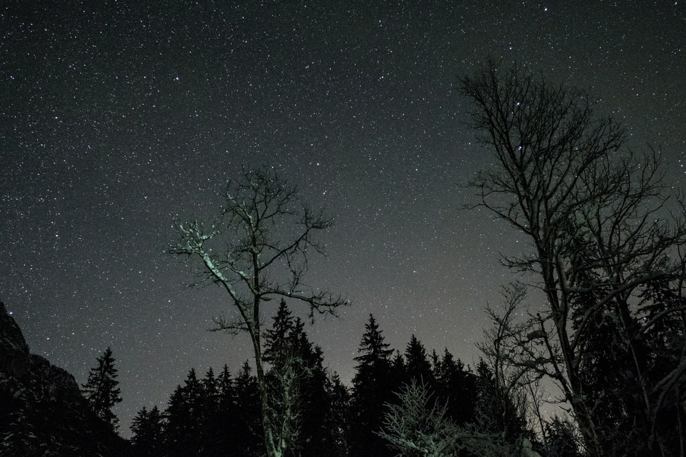 silhouette of trees at night time