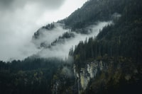 white fog on forest
