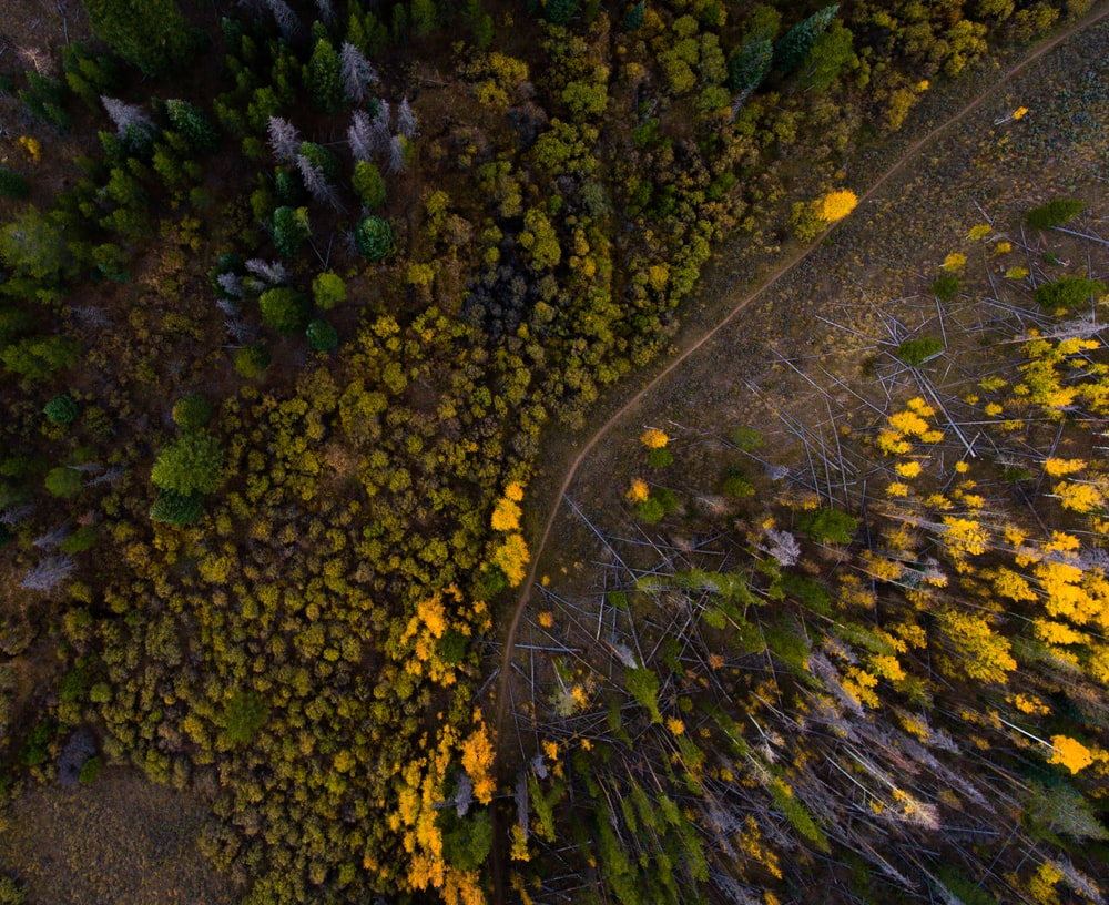 bird's eyeview of forest