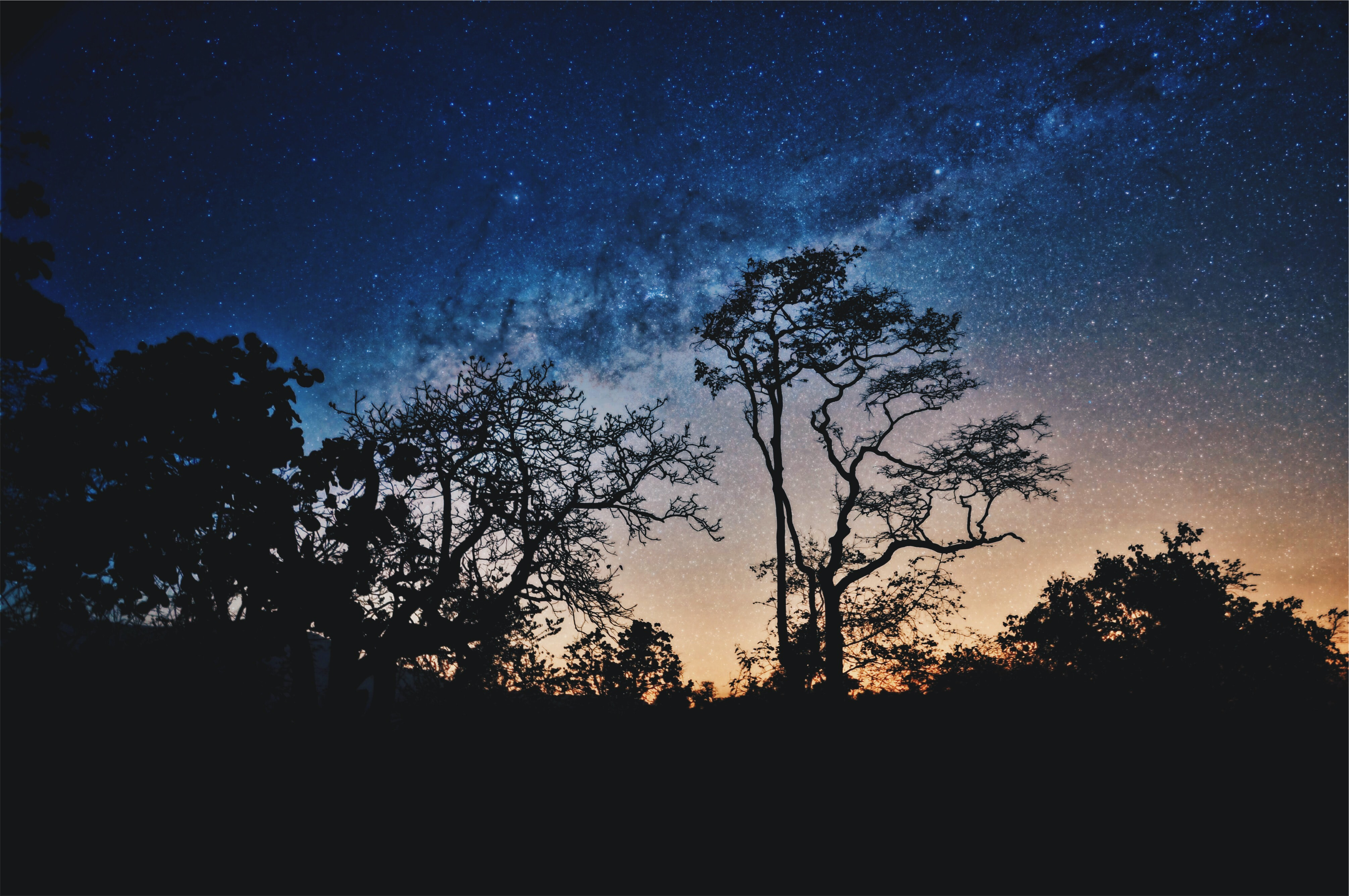 Colorful starry sky over silhouettes of trees