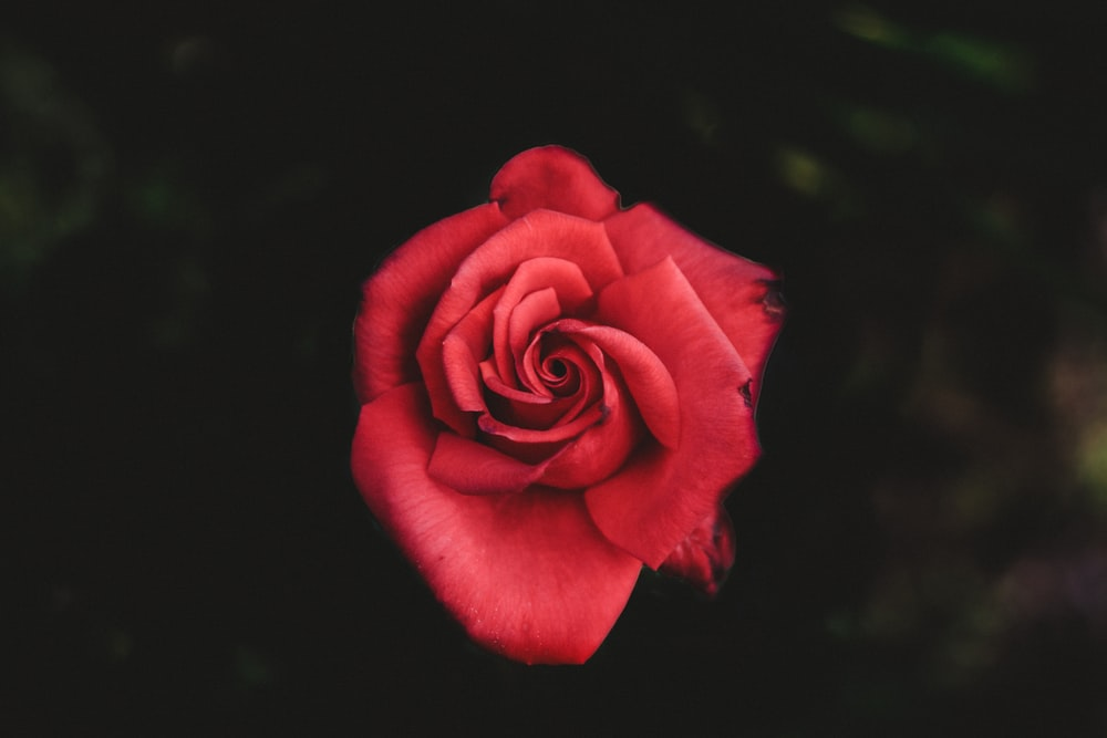Red Love Pictures Download Free Images On Unsplash