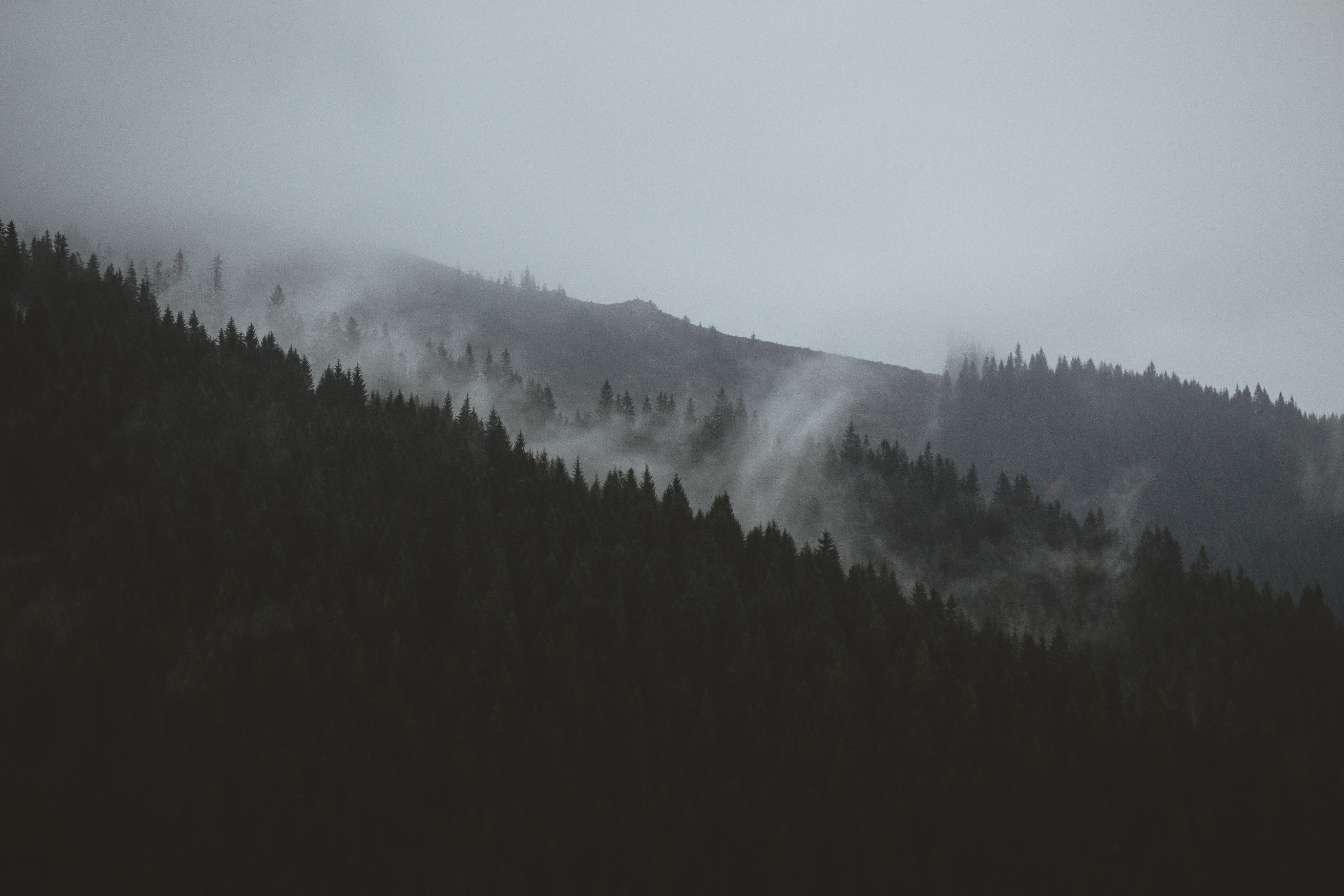 A dim shot of a misty wooded slope in Slovakia