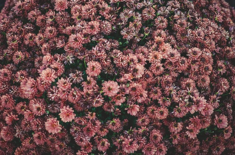 An Overhead Shot Of A Bed Dark Pink Flowers