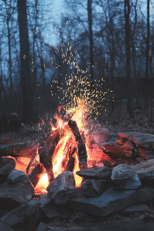 bonfire on forest