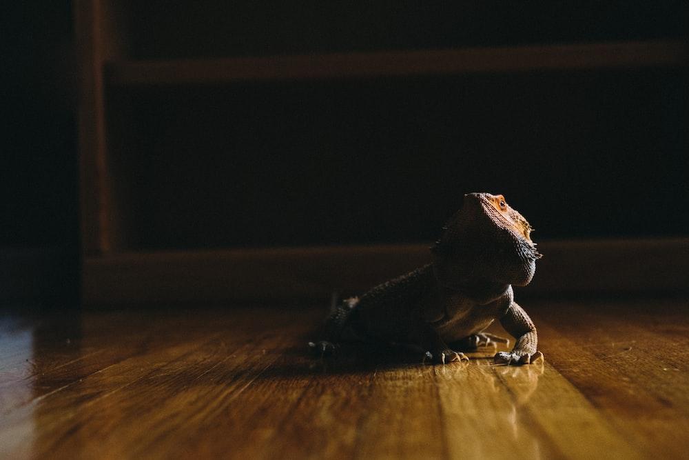 bearded dragon on wooden floor