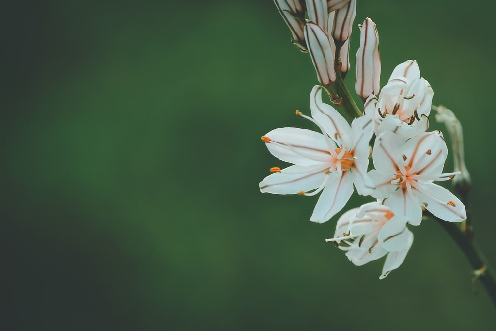 selective focus photography of white and orange petaled flower