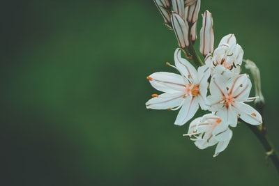selective focus photography of white and orange petaled flower botanical teams background