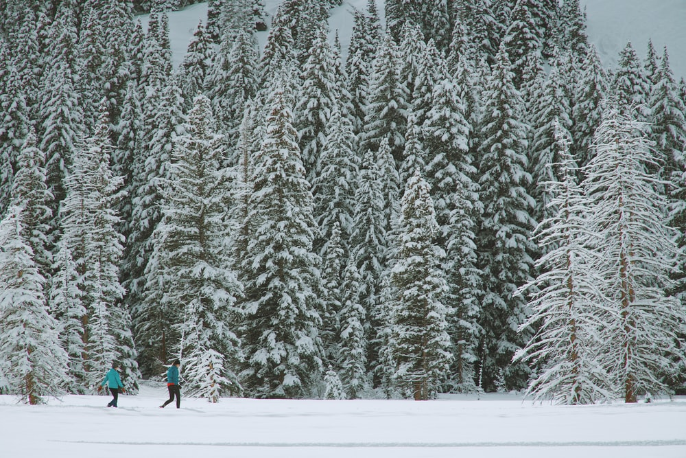 two people walking through pine trees coated with snow during daytime
