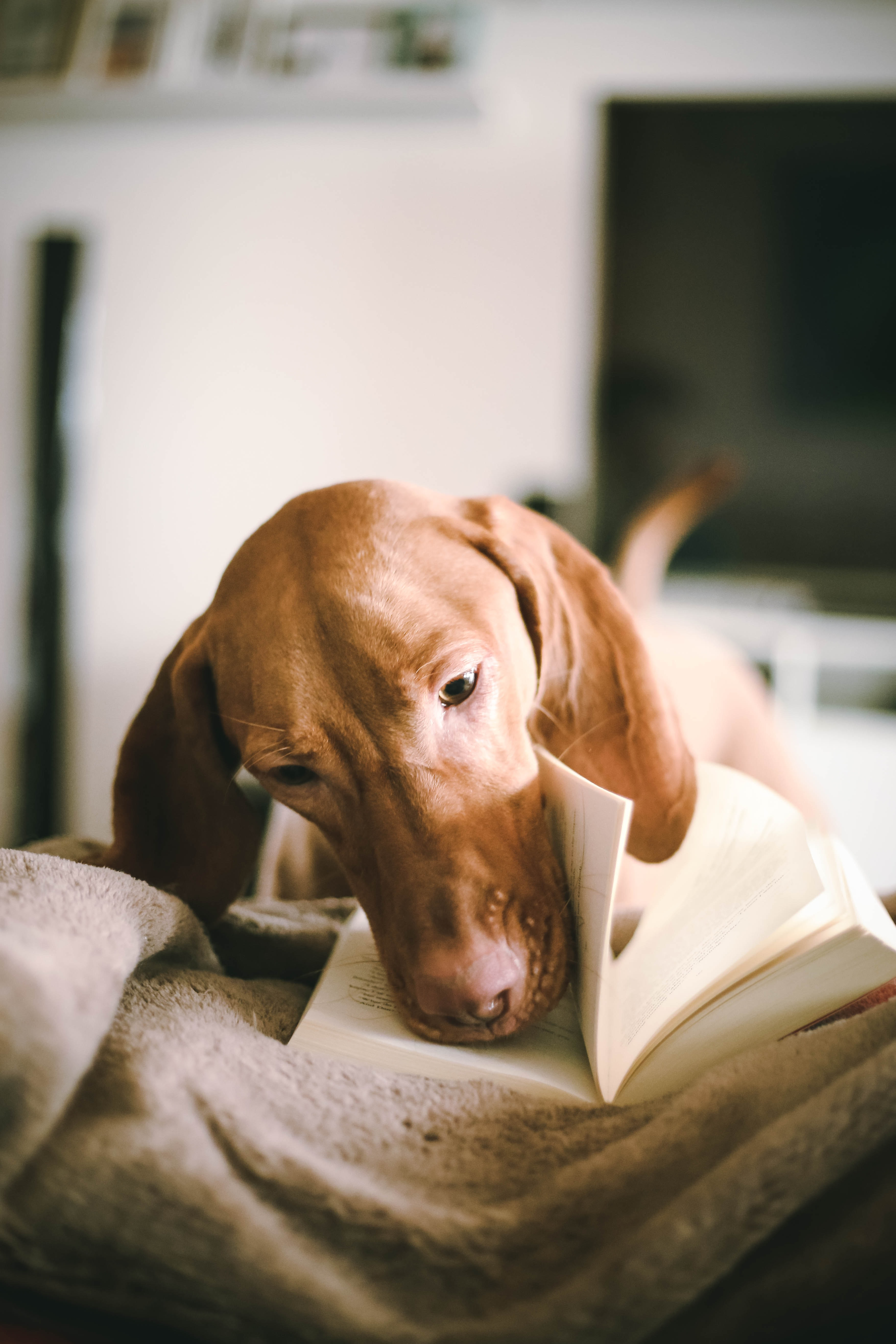 dog flipping book page