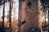 Our tree love stories