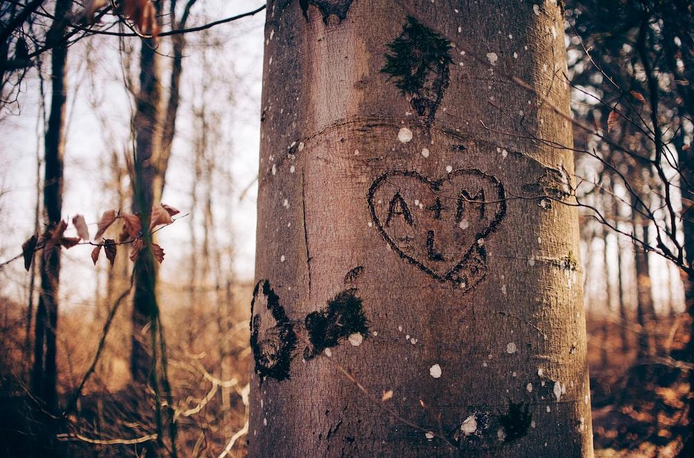 brown tree log