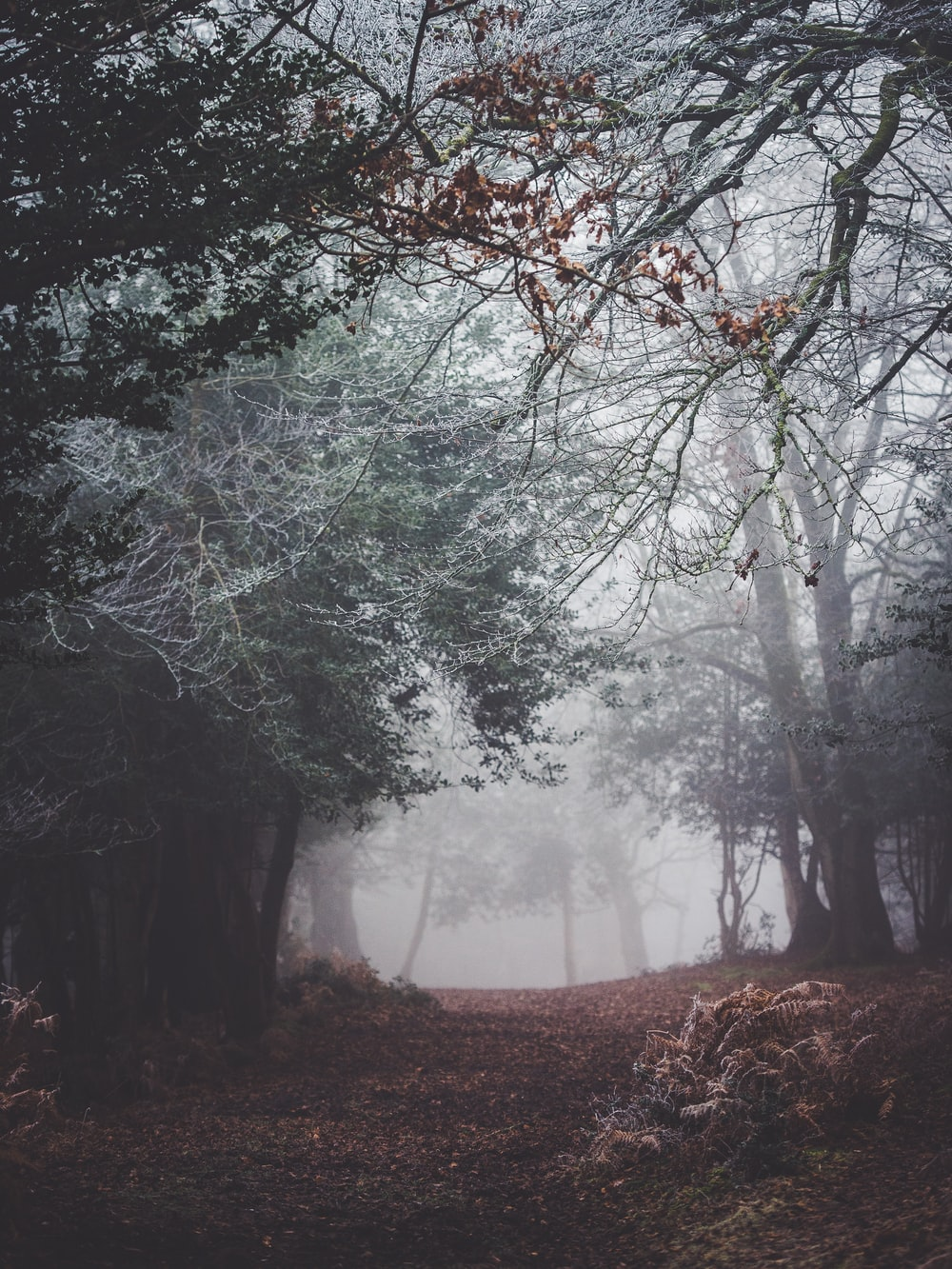 landscape photograpy forest with fogs