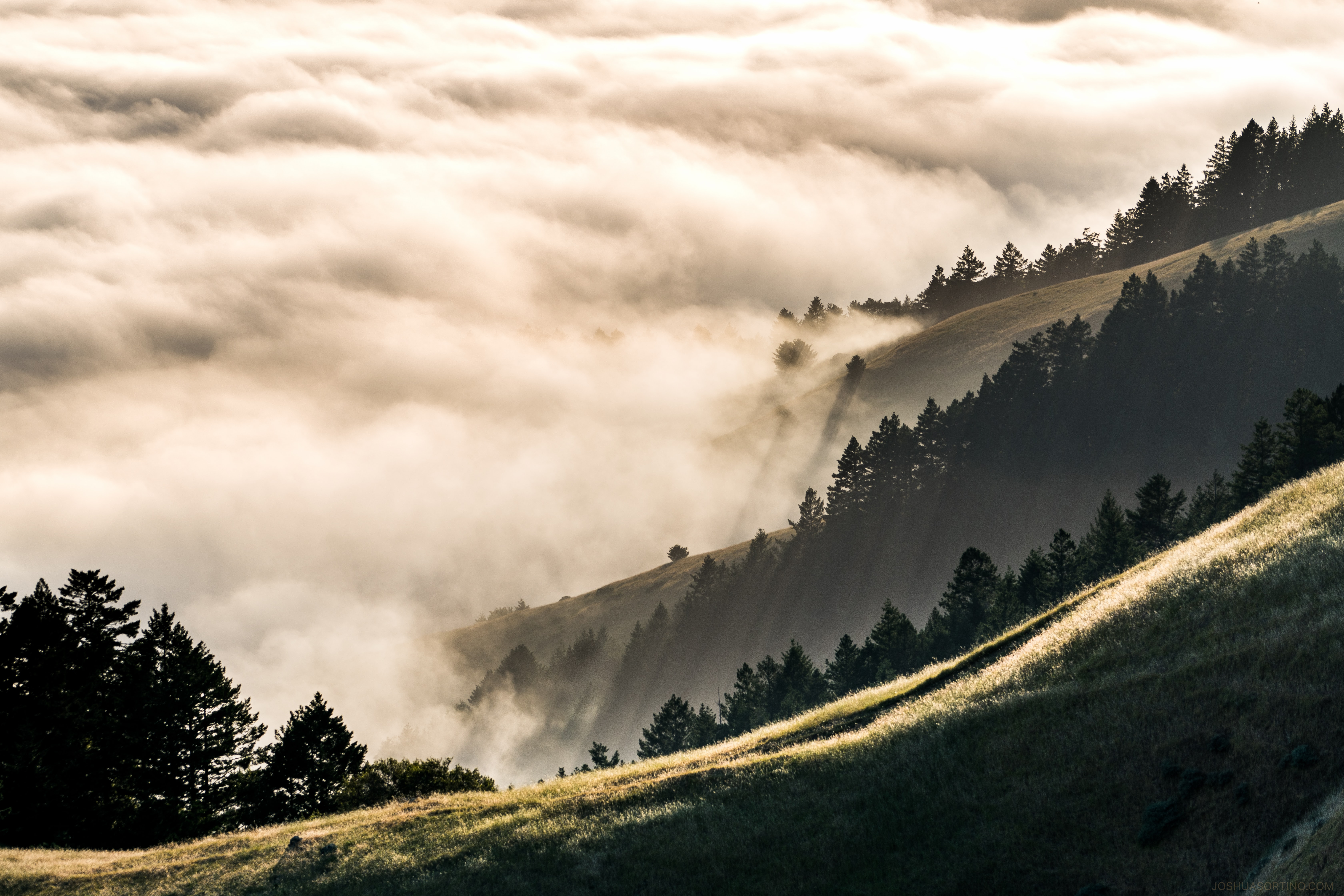 Clouds roll in over dark forest as sun rises