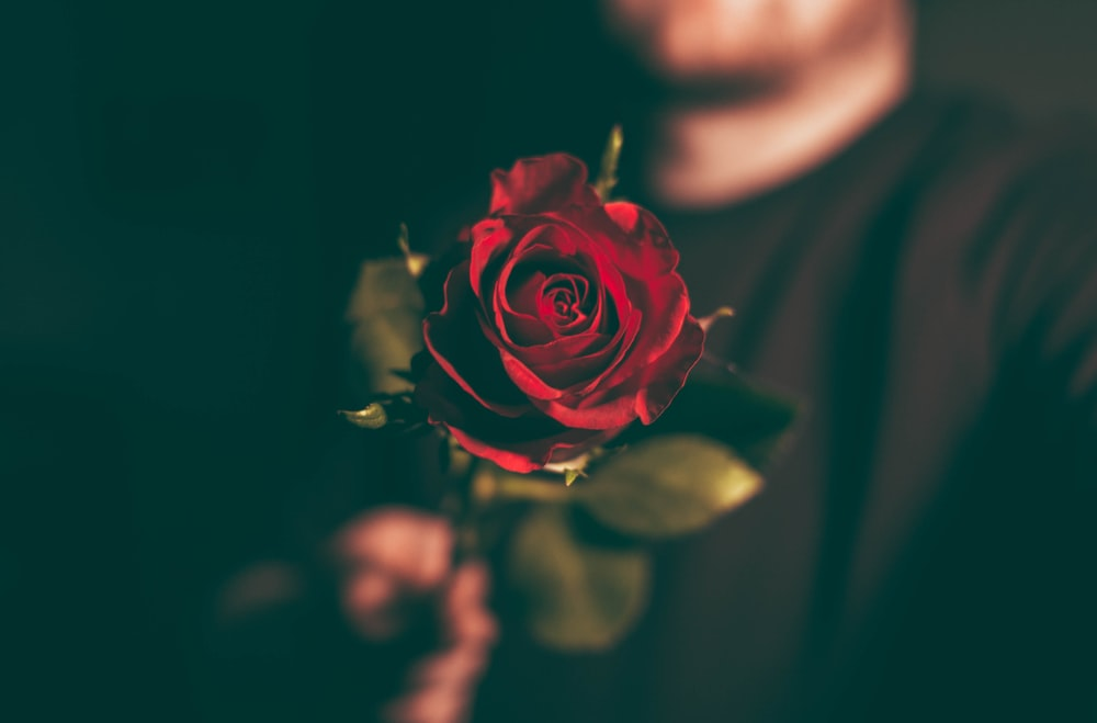 macro shot photography of man holding red rose