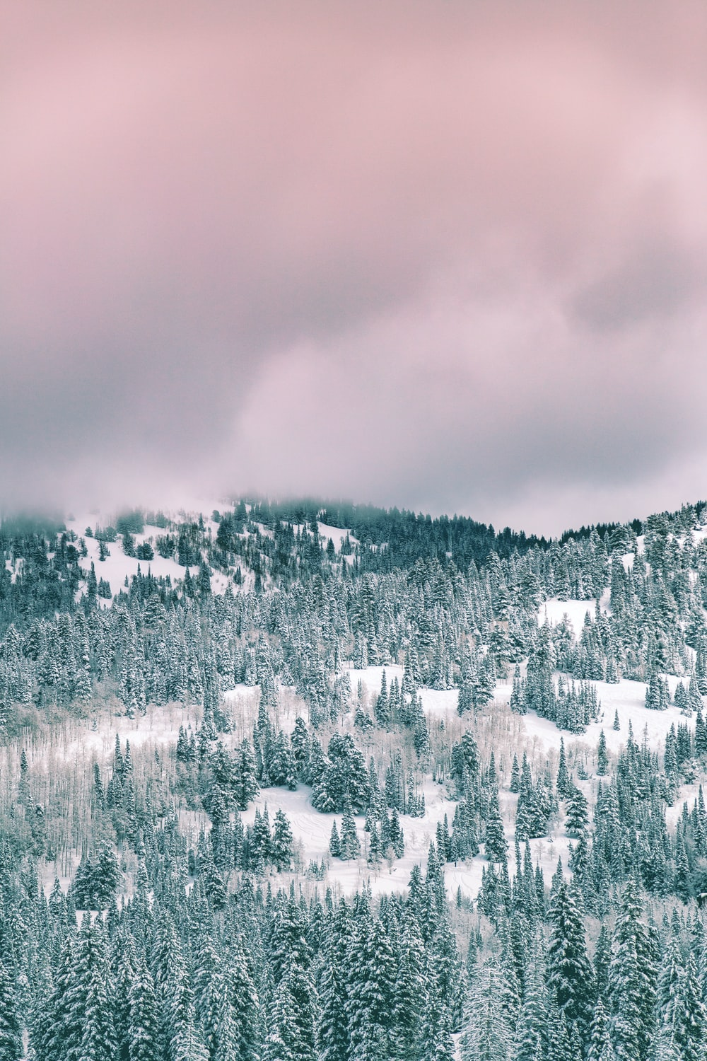 green trees covered by snow under cloudy sky during daytime