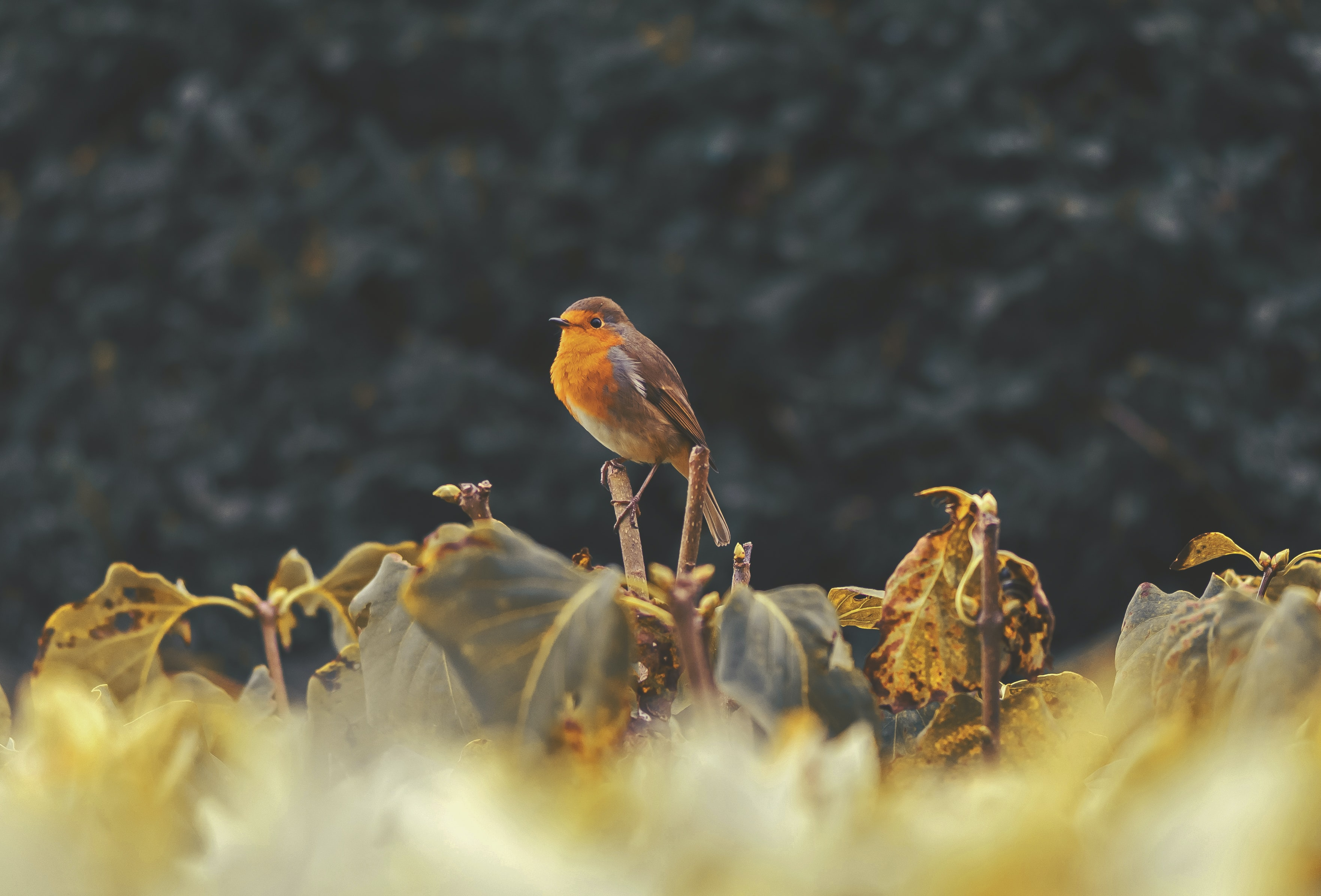 Wild bird perched on leafy plants in a field