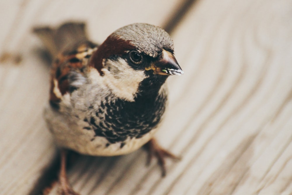 selective focus photography of short-beak bird perched on beige wooden surface