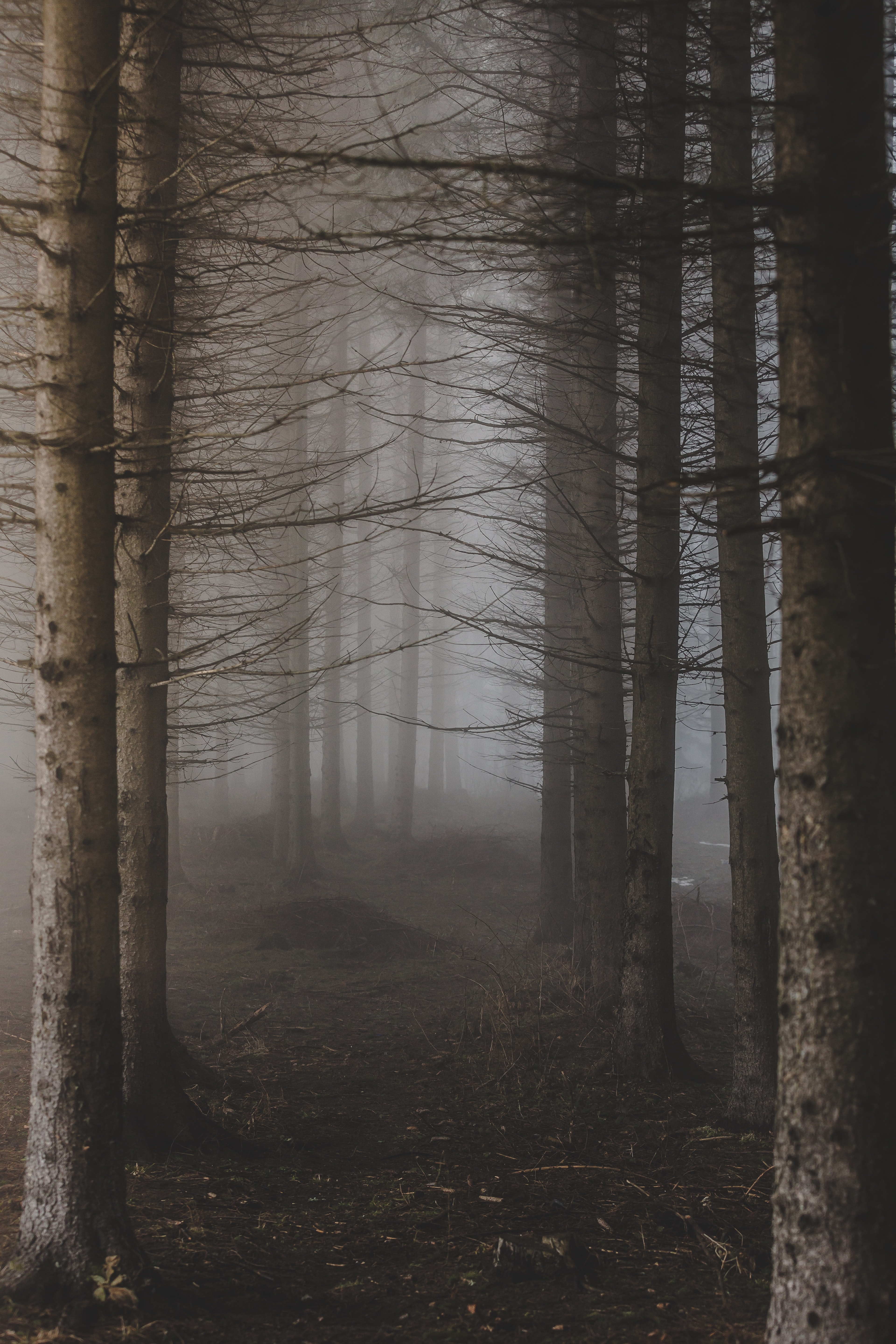 A pale shot of a misty forest path