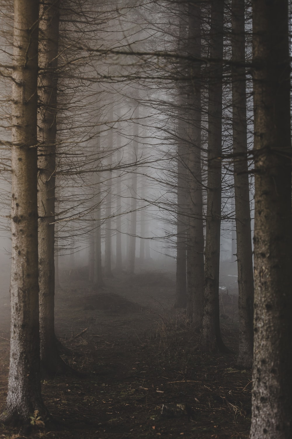 trees surrounded with fogs