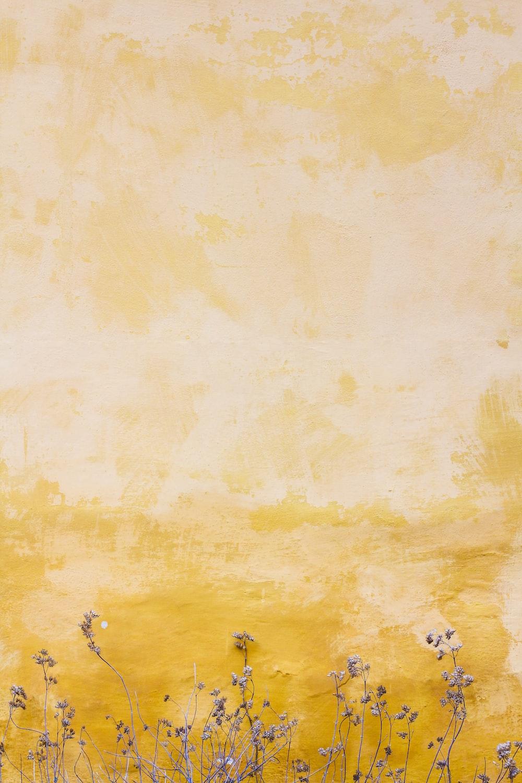 flowers beside yellow wall