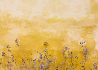 flowers beside yellow wall