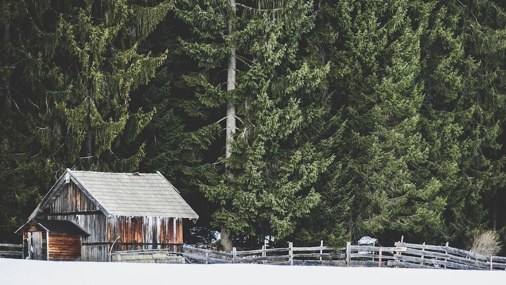 Old Log Cabin Pictures Download Free Images On Unsplash