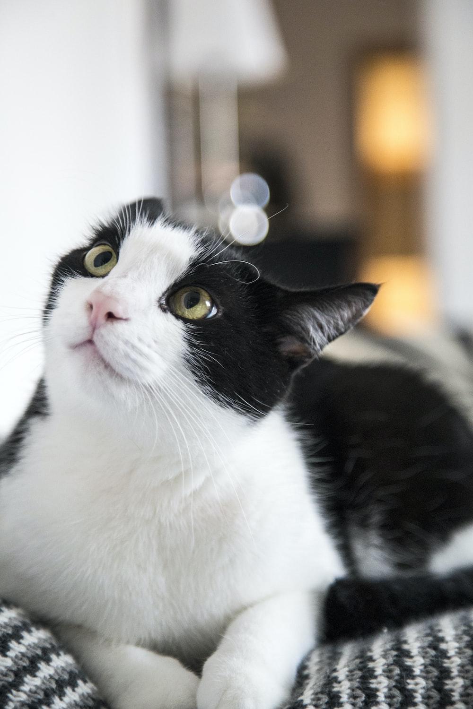 black and white cat in tilt shift lens