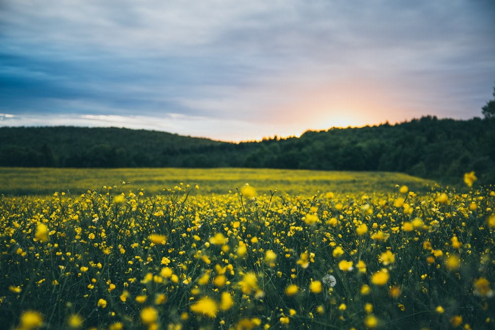 500 Flower Field Pictures Hd Download Free Images On