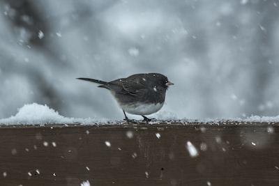 black and white bird beside snow