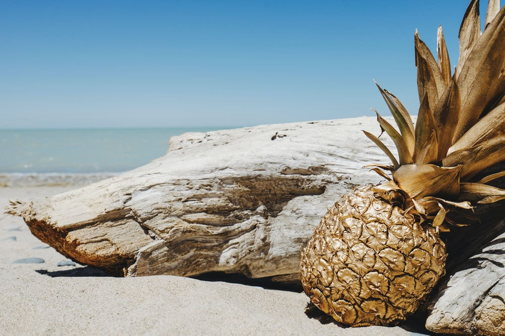 pineapple beside driftwood near ocean